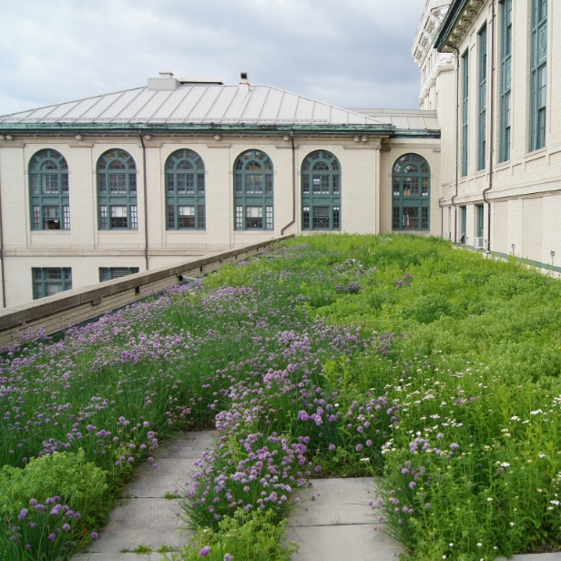 Non irrigated extensive Green Roof