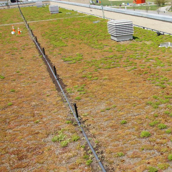 Why Irrigation on extensive Greenroofs